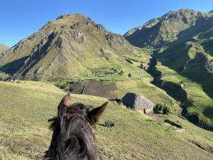 Wild Andes Expedition